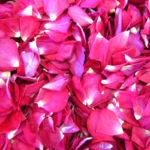 Raspberry_Red