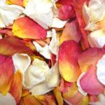 Peaches_and_Cream